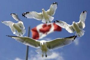 gulls-formation-flag-sky-45874