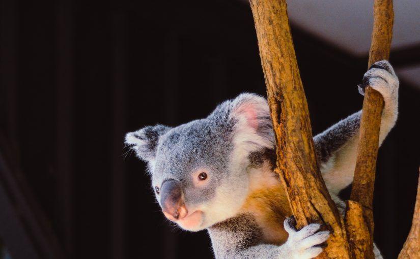¿Qué estudiar en Australia?